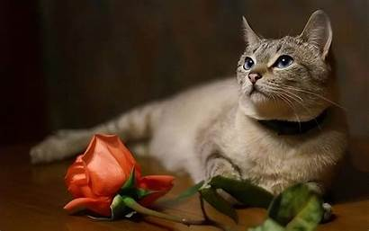 Cats Cat Wallpapers Background Fanpop Lovely Kitty