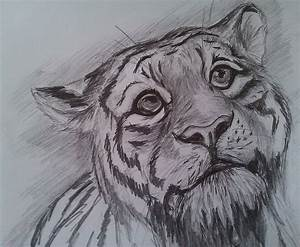 Easy Pencil Drawings Of Tigers Baby Tiger Scetch Drawing A ...
