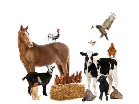 farm animal feed wenas feed rentals