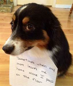 dog shaming poop on the floor With i pooped on the floor