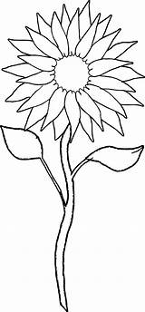 Sunflower Coloring Printable Sheets sketch template