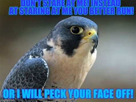 Falcons Memes Blue Falcon Usmc Memes Pictures To Pin On