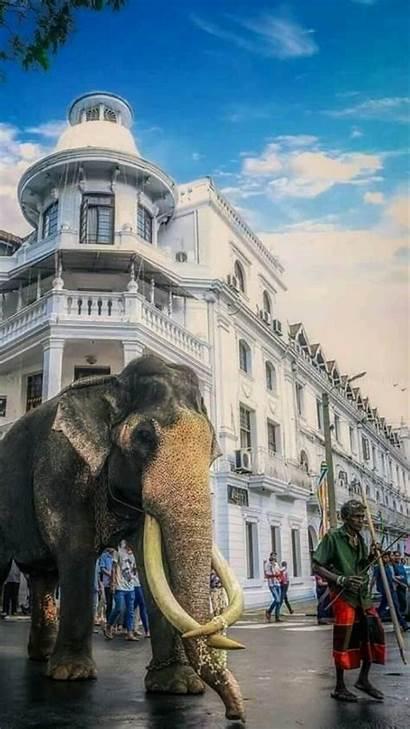 Lanka Sri Wallpapers Raja Zedge Elephant Animals