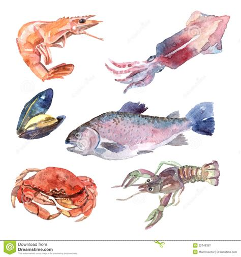illustration cuisine watercolor sea food set stock vector image 52748397