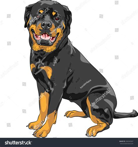 Vector Smiling Dog Rottweiler Breed Sitting Stock Vector ...