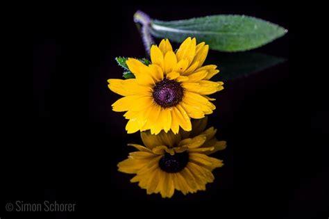 yellow wedding reflection   yellow flower