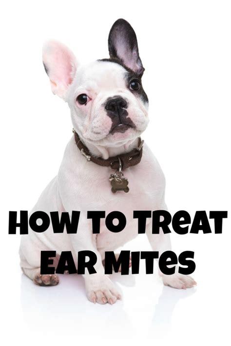 treat  dogs ear mites dogvills