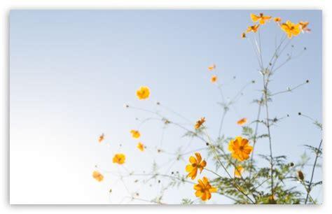 keren  background wallpaper yellow flower