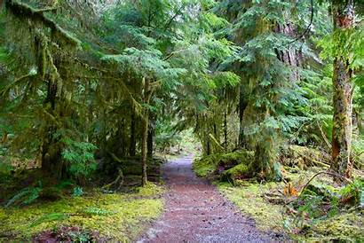 Olympic Peninsula Staircase National Park Trail Loop