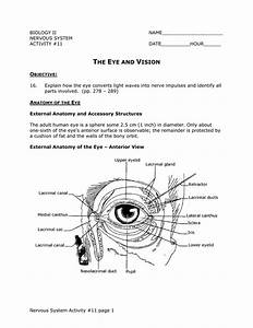 External Anatomy Of The Eye