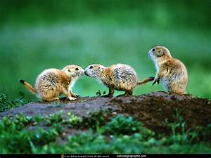 wallpaper: National Geographic Animal Wallpaper Download