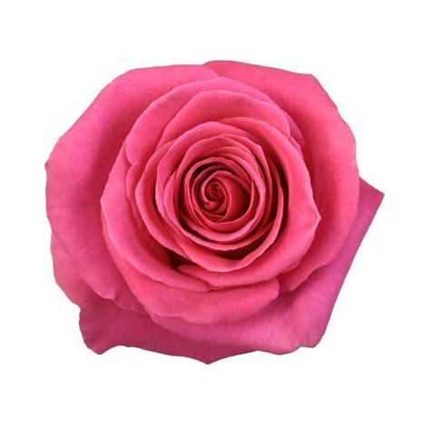 Floyd the wall flower scene meaning. Pink Floyd | Hot pink roses, Pink, Diy wedding flowers