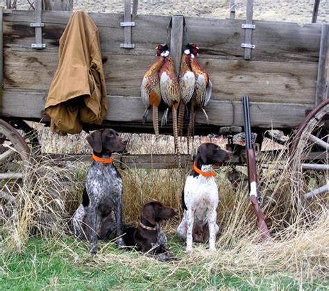 25 best ideas about pheasant hunting on pinterest bird