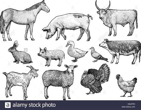 farm animal set illustration drawing engraving  art