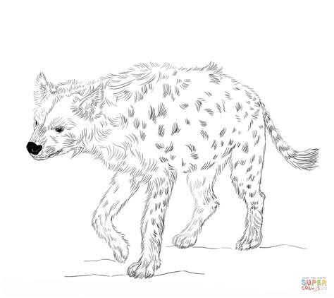 laughing hyena coloring pages coloring home