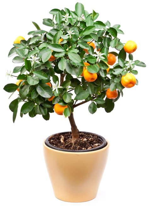taille d un oranger en pot amazing decorer un pot en terre cuite 12 comment rendre plus attrayant vos pots de fleurs en