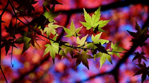 leaves, Macro, Nature Wallpapers HD / Desktop and Mobile ...