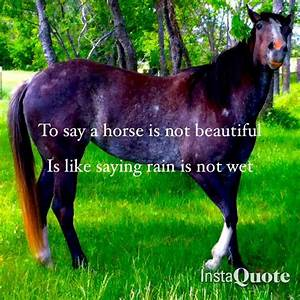 All horses are beautiful, wether it's a Appaloosa with a ...