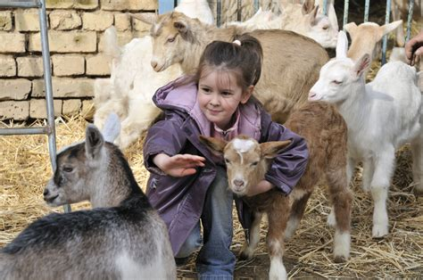 goat pictures for children 130 | farm 1