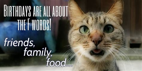 Birthday Meme Cat - funny happy birthday cat meme www pixshark com images galleries with a bite