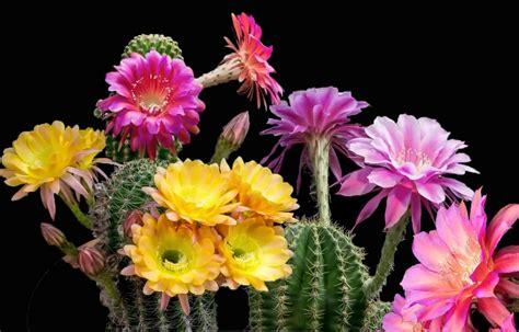 Cactus Da Interno by Fiori Da Interno Ecco Alcune Variet 224 Perfette Per L