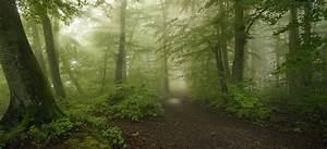 Forest, Path, Mist, Morning, Spring, Trees, Moss, Shrubs, Sunlight, Nature, Landscape, Dirt, Road, Wallpaper
