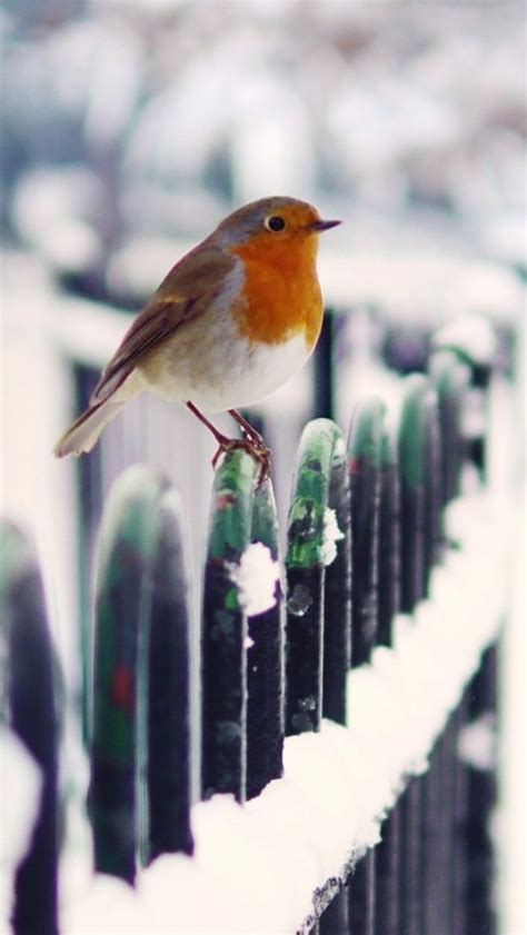 Tons of awesome bird phone wallpapers to download for free. Snow Fence Bird Winter iPhone Wallpapers | Winter bird, Birds, Bird wallpaper