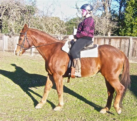 horse he