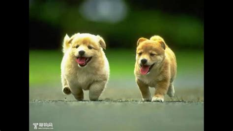 Video Hình ảnh Những Chú Chó đẹp Và Dễ Thương Dã Man
