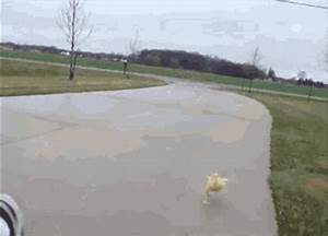 Duckling GIFs - Find & Share on GIPHY