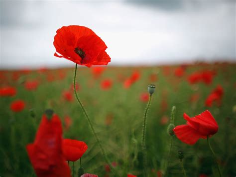 Poppy Appeal 2014 The Two Best Reasons To Buy A Poppy