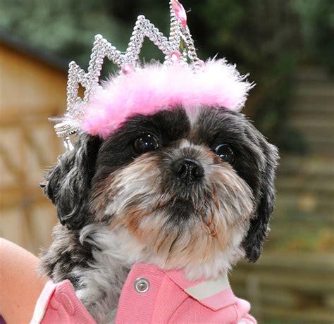 Dottie  Ee  Shih Ee    Ee  Tzu Ee   In Her Birthday Tiara Dottie  Ee  Shih Ee    Ee  Tzu Ee   In H Flickr
