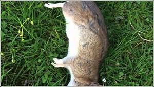Ratte Im Haus : ratten vertreiben garten ratten vertreiben neubefall verhindern ratten im haus toilette im ~ Buech-reservation.com Haus und Dekorationen