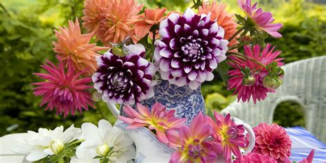popular flowers summer flowers the most popular blooms for every month