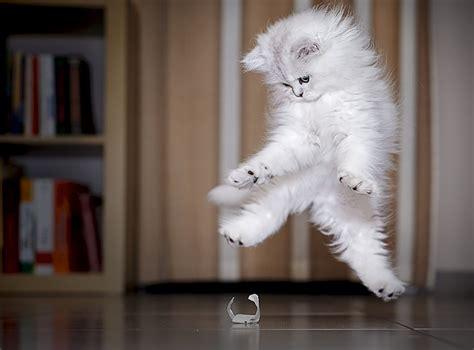 funny jumping cats  netloid news technology