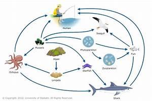 Diagram  Terrestrial Food Web Diagram