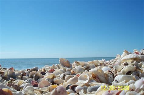 early morning shelling picture  sanibel island