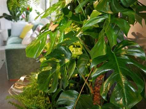 tendance jungle nature luxuriante et camaïeu de verts tendance jungle nature luxuriante et camaïeu de verts dans la déco