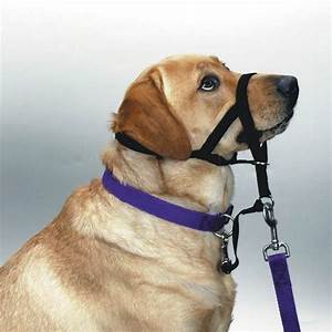 Halti No Pull Head Collar Harness For Dogs Train Your Dog ...