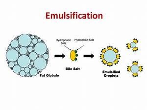 Lipid metabolism - презентация онлайн Pancreatic Insufficiency