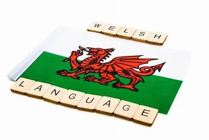 Welsh Amy Wife Flag Husband Says Lehighvalleylive