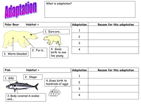 adaptation worksheet polar bear fish and cactus by teach biology teaching resources