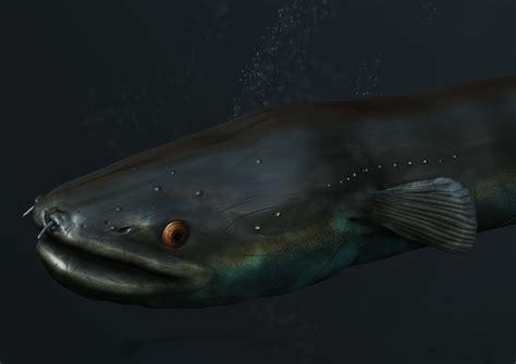Longfin Eel  Human + Nature