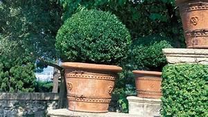 Buchsbaum Befall Raupen : buchsbaumz nsler so retten sie ihren buchsbaum vor der raupe bayern 1 radio ~ Watch28wear.com Haus und Dekorationen