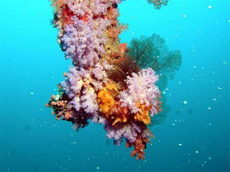 coral reef color free images sea underwater coral reef invertebrate