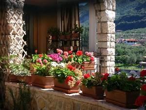 die richtigen pflanzenbehalter fur deinen balkon With französischer balkon mit große sträucher für den garten