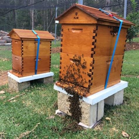 Backyard Honey Bee Hive by The Ultimate Beeginner S Guide To Aussie Backyard