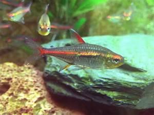 Fische Für Anfänger : aquarium anf nger so machst du alles richtig ~ Orissabook.com Haus und Dekorationen