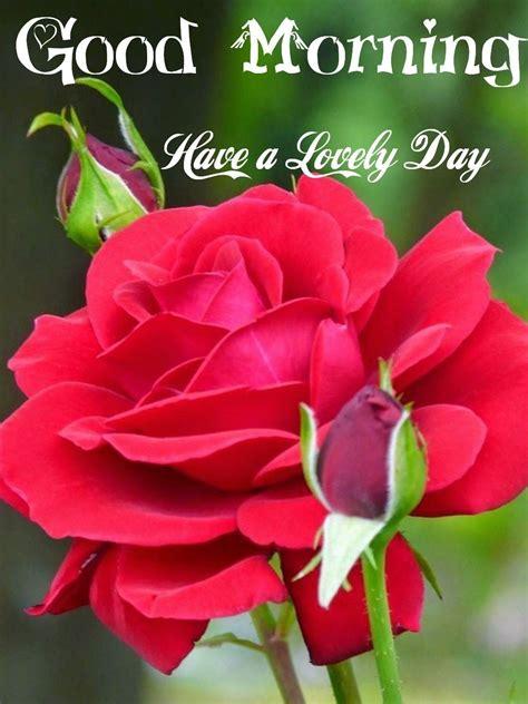 Pin by Chaturbhuj Poddar on Good Morning nice | Good ...