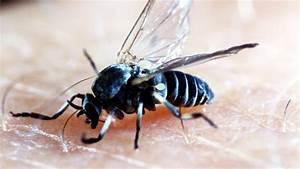 Kleine Schwarze Würmer : kleine schwarze fliegende tiere ~ Lizthompson.info Haus und Dekorationen